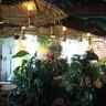 Фотография: Ресторан Гамак